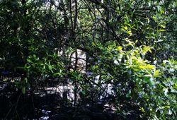 Concrete Amongst Mangrove ,