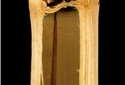 Bamboo Elevator
