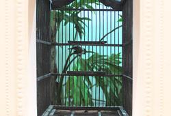 Bird Cages 2013