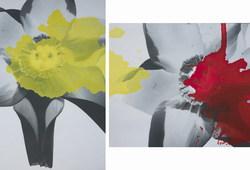 Narsissus