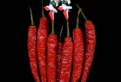 Chili Dancer