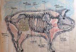 L'Anatomie des Fils de Pute