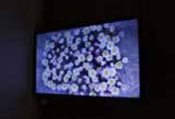 Fleur de la terre & The Frames #1