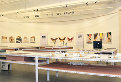 """125.660 Spesimen Sejarah Alam"" Installation View #1"