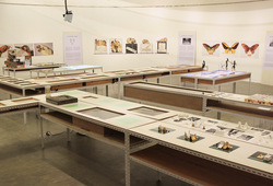 """125.660 Spesimen Sejarah Alam"" Installation View #4"