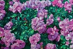 #90 Rose