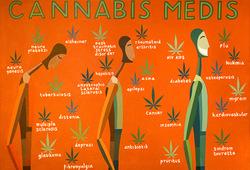 Cannabis Medis