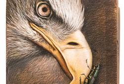 Belalang dan Burung Elang