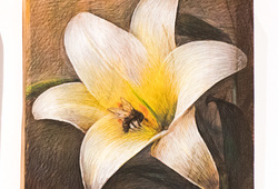 Lebah Menyerbuki Bunga Lili