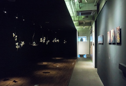 """Life Force"" Installation View"