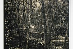 Karimun Jawa Mangrove