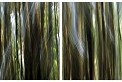 Hutan=forest