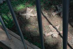Jardin Zoologique D'acclimatation (Detail View #2)