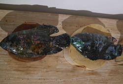 Make a fish detail view #1