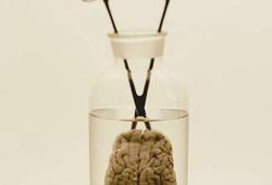 Otak #2