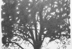 Shadow #11