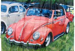 Orange Beetle