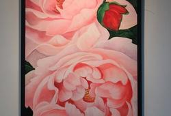 Serenade of Roses