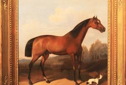 Kuda dan Pemandangan