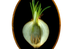 Onion Traps