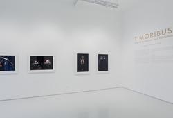 Timoribus